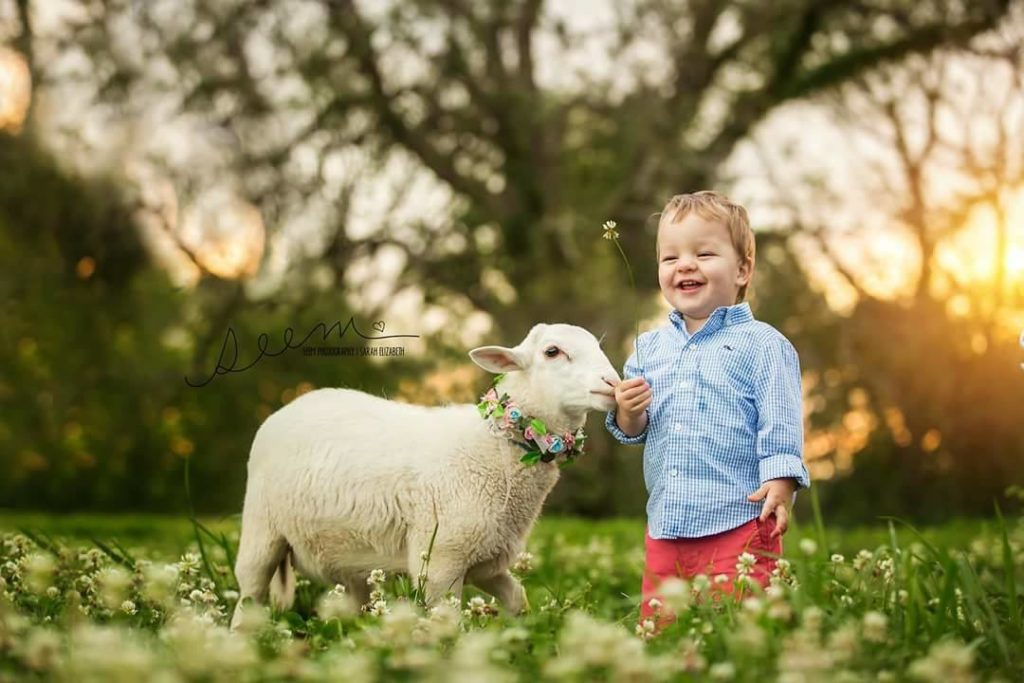 Houston Animal Photographers SEEM photography Limited Edition Lamb in Field
