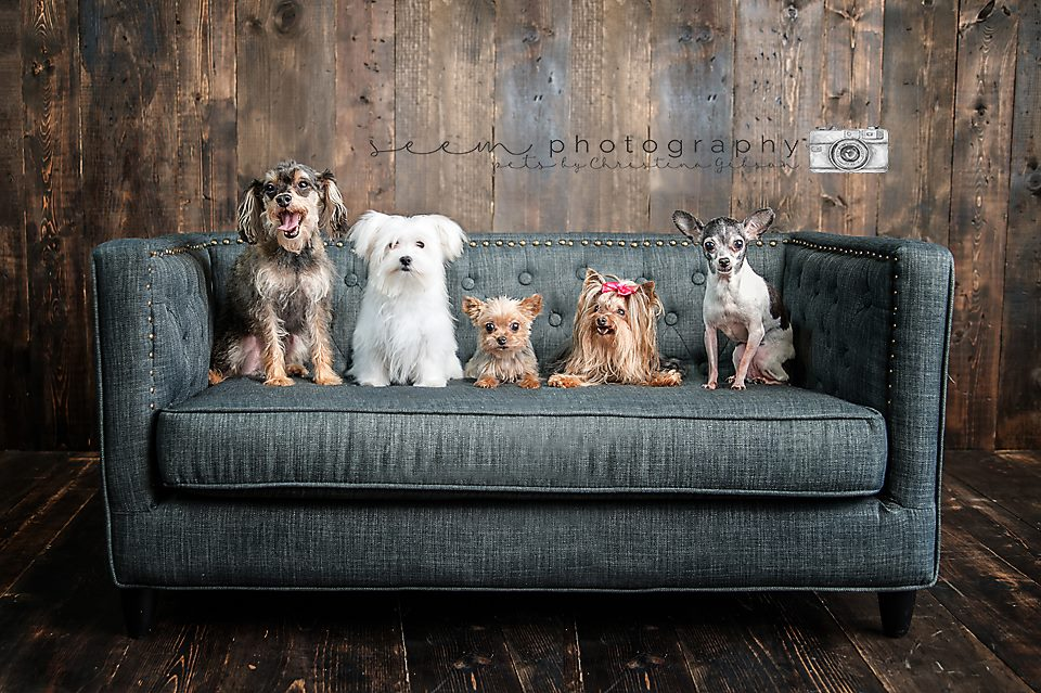 Houston Pet Photographers SEEM photography Pets on Couch