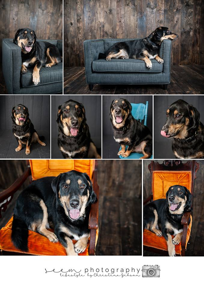 Houston Pet Photographers SEEM photography Buddy