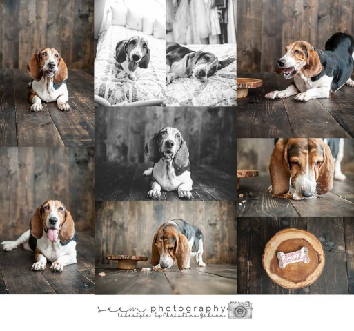 Houston Pet Photographers SEEM photography Basset Hound