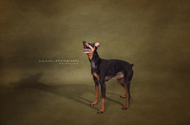 SEEM photography Dog Fine Art