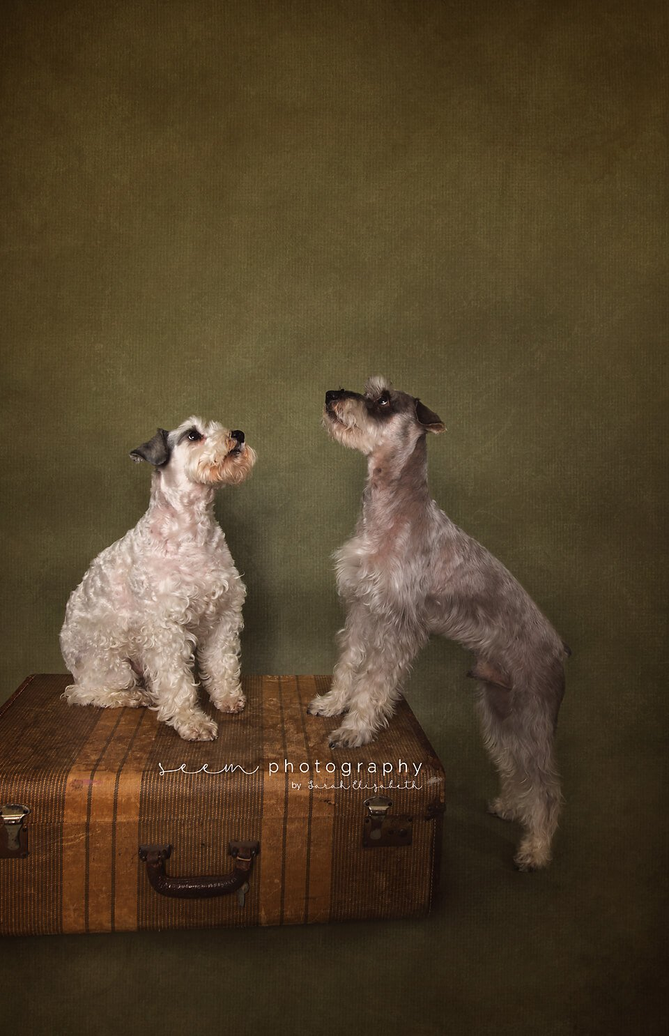 SEEM photography Dogs Fine Art